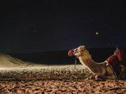 Camel Galaxy Dubai Darkness Milkyway